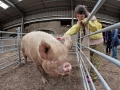 Nora Brabazon  7 years from Bray Co Wicklow with Matilda  the 5 year old  Middle White Sow  from Carlow - jennifer o'sullivan
