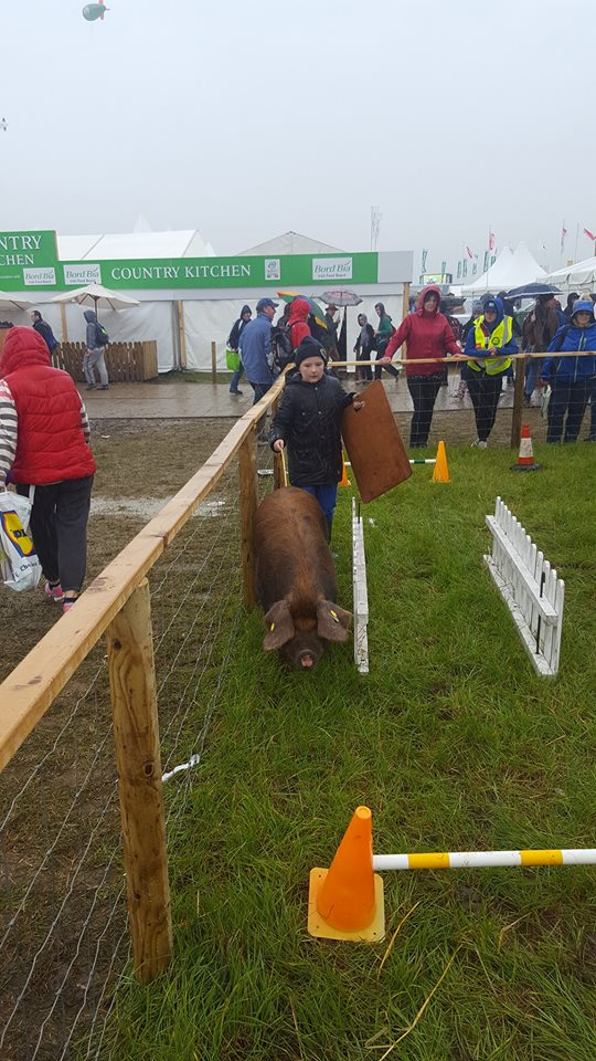 pig-agility